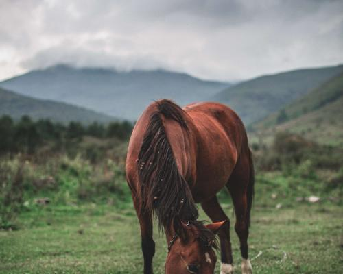 horse-riding-in-armenia